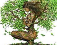 Mara_drevo